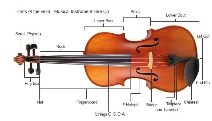 Parts Of the Viola